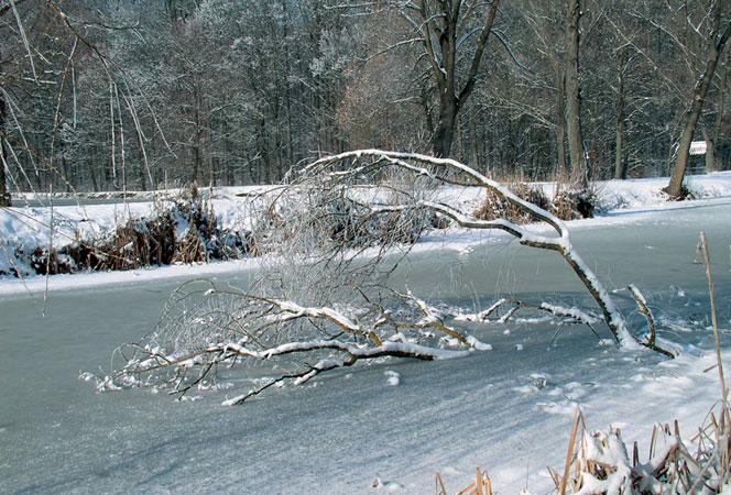 Grubišno Polje - Zima